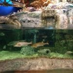 Bass Pro Shops Fish Aquariums