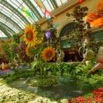 Bellagio Botanical Flower Garden Conservatory
