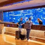 Coral Reef Aquarium Mirage Hotel Las Vegas