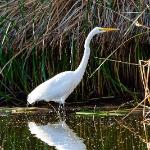 Henderson Bird Viewing Preserve