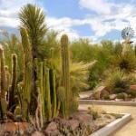 Las Vegas Springs Preserve Botanical Gardens