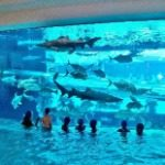 The Tank Pool at Golden Nugget Las Vegas