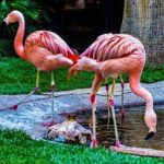 The_Wildlife_Habitat_-_Flamingo_Hotel_&_Casino_Las_Vegas