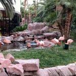 Wildlife Habitat Flamingo Hotel Las Vegas