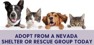 Las Vegas Pet Adoption