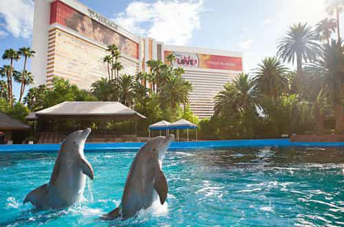 Dolphin Habitat