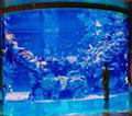 Silverton Mermaid Aquarium Fish Feeding Las Vegas