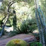 UNLV Desert Xeriscape Garden – UNLV campus