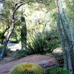 UNLV Desert Demonstration Gardens Las Vegas