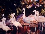 Wildlife Habitat at the Flamingo Hotel Las Vegas