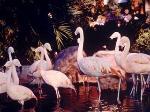 Wildlife Habitat at the Flamingo Hotel Las Vegas