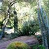 UNLV Desert Landscape Gardens